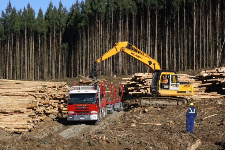 Hyundai log loader